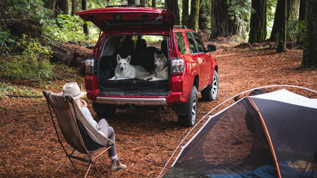 Toyota 4Runner TRD Pro red with dogs